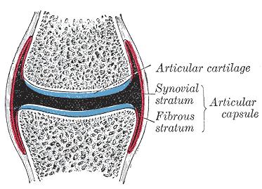 Capsulitis FEATURE